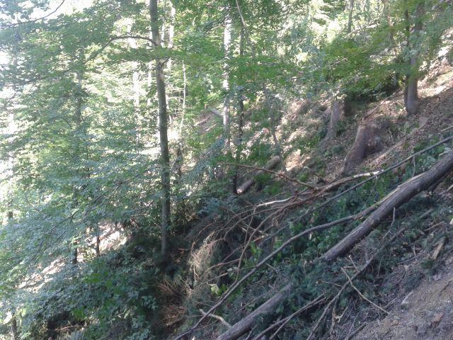 Nekaj gozdarskih - foto
