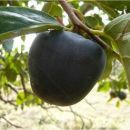 Moje sadnice voća