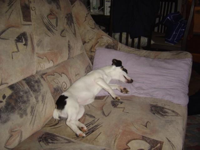 Moja psička Dina - foto