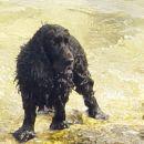 Jessica v morju