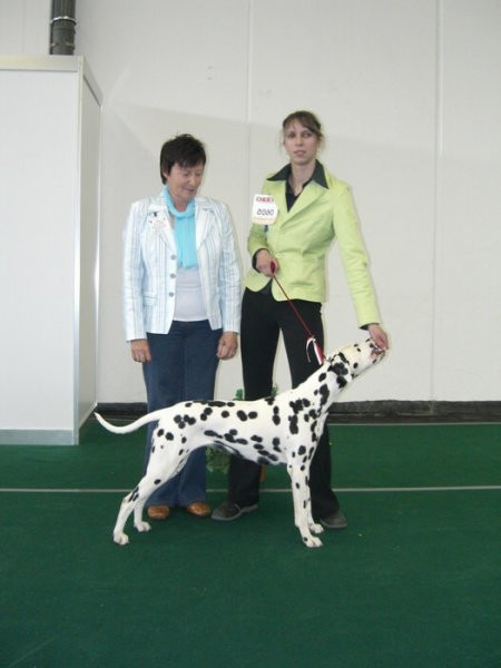 CACIB SALZBURG: Panthera Unica Very Lovely - Junior BOG
