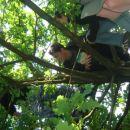 opice na drevesih :P
