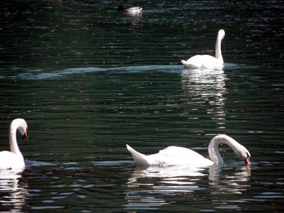 13. junij 2009 - Ljubljana-Zbiljsko jezero - foto povečava