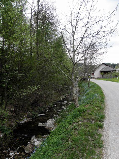 27. april 2010 - Tuhinjska dolina - foto