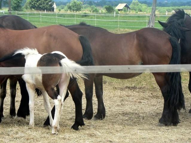 Konji na poti v Iški vindgar - foto