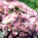 Rože in čebele