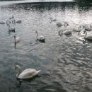 Na in ob Zbiljskem jezeru...