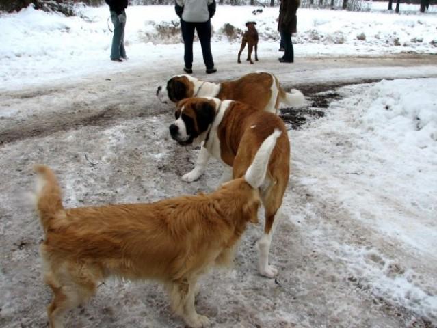 7. januar 2006 - foto