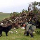 Planina - Prokorško jezero (1500 m); ppastir Mujo in njegov pes