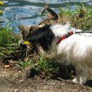 Geri opazuje kačjega pastirja...