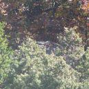 nekaj se skriva v grmovju...