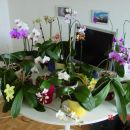 15 cvetecih, junij 2007