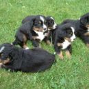Vsi v leglu (Lucy,Lenny,Lina,Luy,Larix)