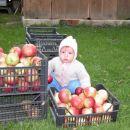 Poglejte, koliko jabolk sem nabrala.