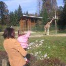 Mami, poglej, žirafa