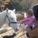 Lahko sem pobožala konjička