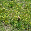 mladi pustolovec se podaja v nevarnost...trenutno hodi po visoki,poraščeni goščavi..