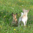 pozor, nekaj v travi...