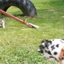 Od tu dalje pa s to mačko ni bilo več šale - je Bianca bežala pred njo.