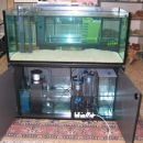 nas 320 lt morski akvarij....se v pripravi Steklo iz kristala 12mm,mere cm 120x52x52 , pr