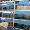 Razstavni akvariji