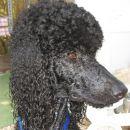 Portret z novo poletno frizuro