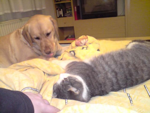 Lina in Čarli - foto