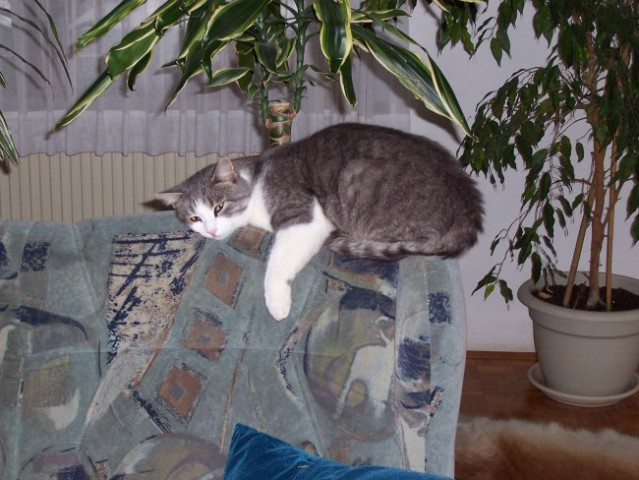 Moj mačkon - foto