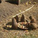 živalski vrt ... malica :)