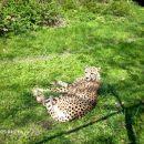kok mu vela k leži na sončku :)