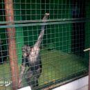 ejga .... to  je pa opica .... :)