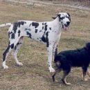 Hailey in Resa pri igri