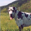 Hailey poletje 2005