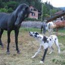 igra s konji