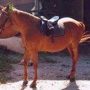 Špela 2004