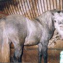 2000-Thais star 3. leti