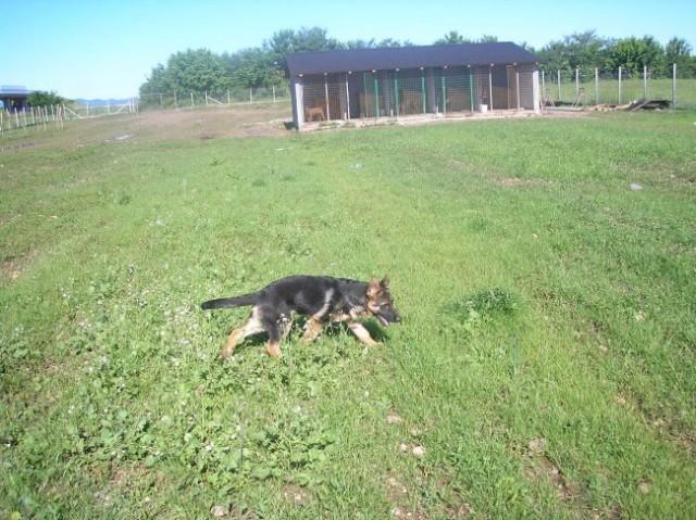 Moji psi - foto