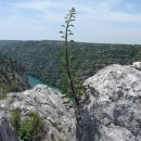 Tudi iz žive skale raste