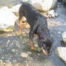 moja psička lina