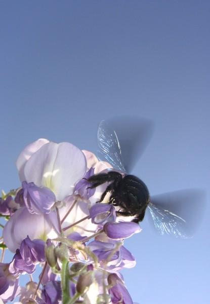 Čebele - foto