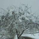 Drevo (žled)