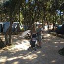 v kampu na sprehodu...