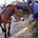 Bulč skrbi za konja