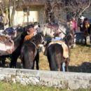 Konjeniki so aktivni čez celo leto!