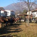 Konji so bili mirni