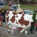 Izgubljen krava