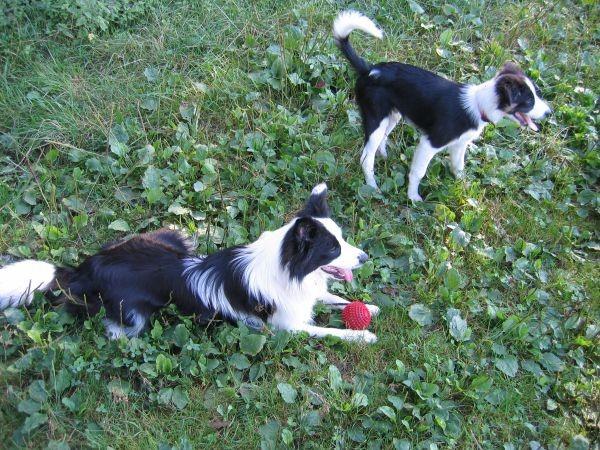 Zajčja Dobrava - 13.08.2006 - foto povečava