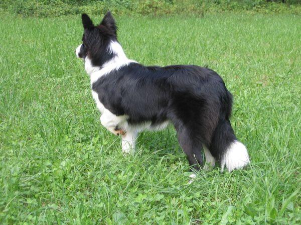 Zajčja Dobrava - 13.08.2006 - foto