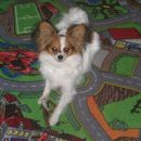 Moj naljubši tepih