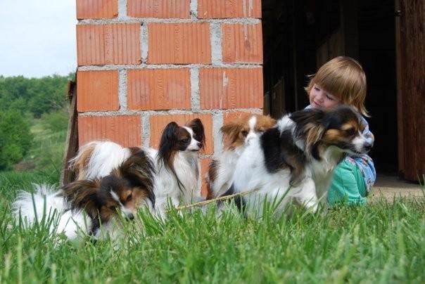 Pasji piknik - april 09 - foto